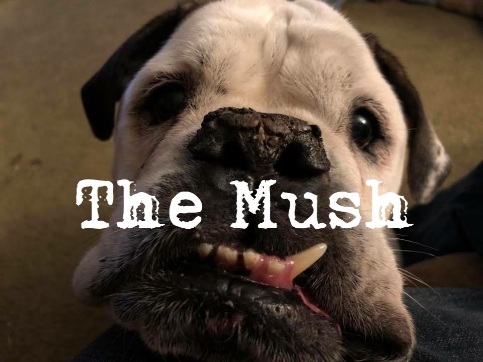 the mush